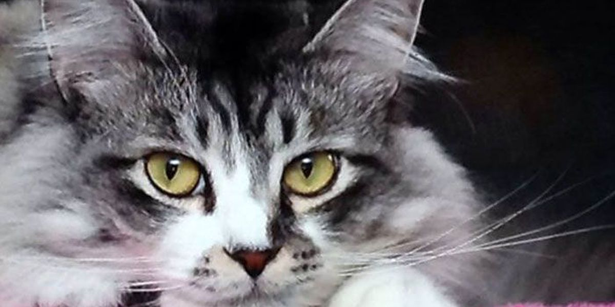 SLIDESHOW: Viewers share their cat pics on National Cat Day